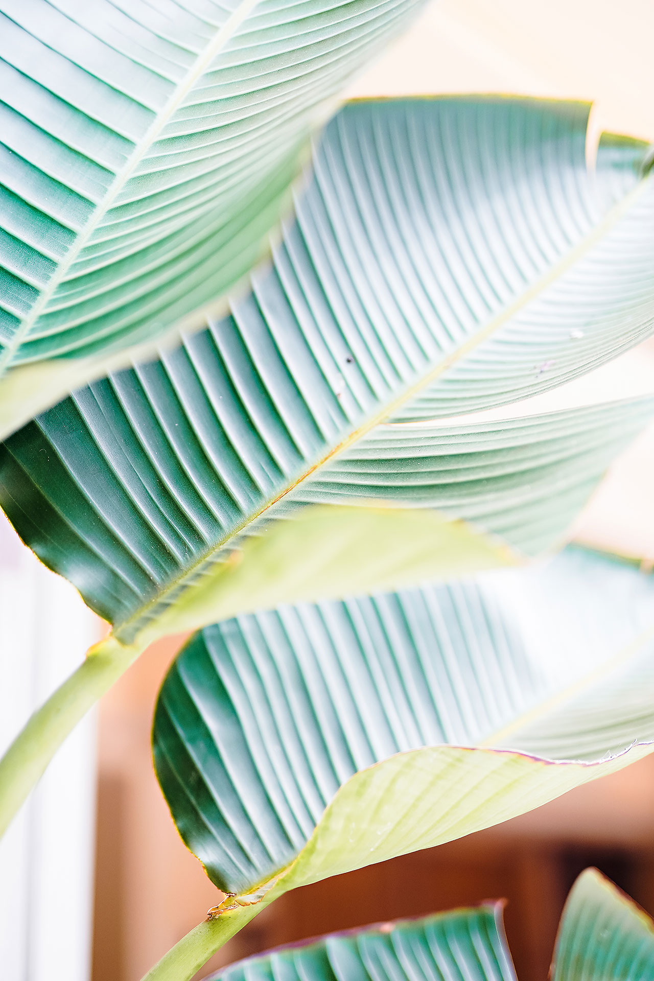 Kendra Pete Four Seasons Maui Wedding 004